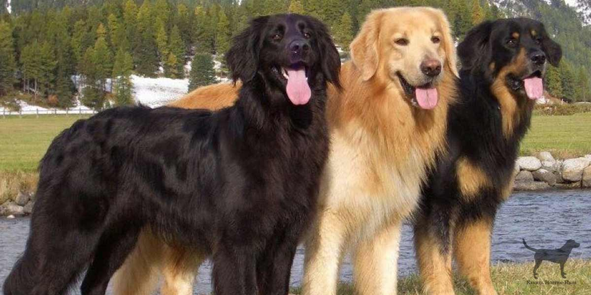 A short list of working dog breeds